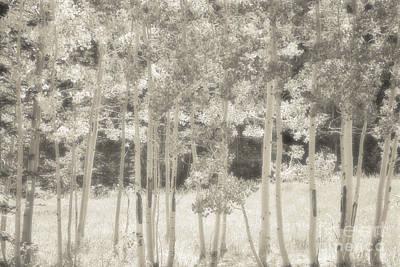 Sandia Mountains Photograph - Soft Birch Glow by Andrea Hazel Ihlefeld