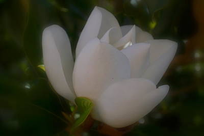 Photograph - Soft Bloom by Rima Biswas