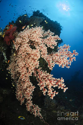 1-war Is Hell Royalty Free Images - Soft Coral On The Liberty Wreck, Bali Royalty-Free Image by Todd Winner