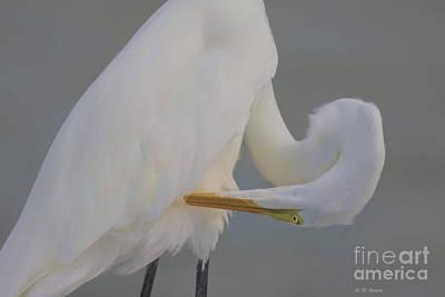 Egret Watercolor Photograph - Soft Egret Glow by Deborah Benoit