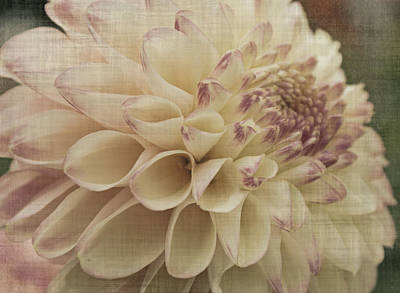 Photograph - Soft Lady by Terrie Taylor