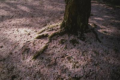 Soft Light On A Pink Carpet Of Fallen Art Print by Stephen St. John