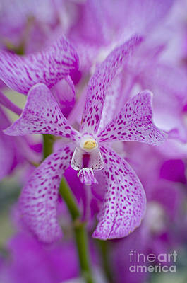Soft On Orchids Art Print by Jacky Parker