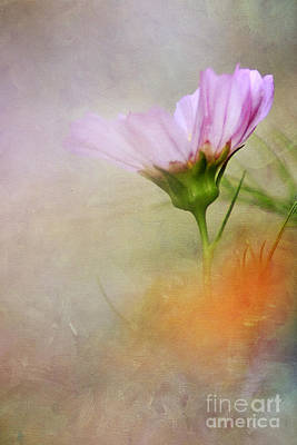 Soft Pastels Art Print by Darren Fisher