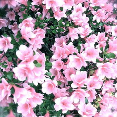 Photograph - Soft Pink Azalea  by Nancy Patterson