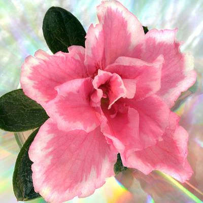 Soft Pink Azalea Original