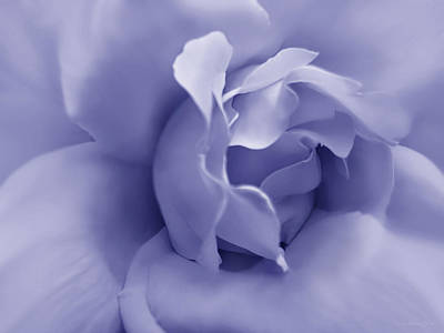 Photograph - Soft Purple Rose Flower by Jennie Marie Schell