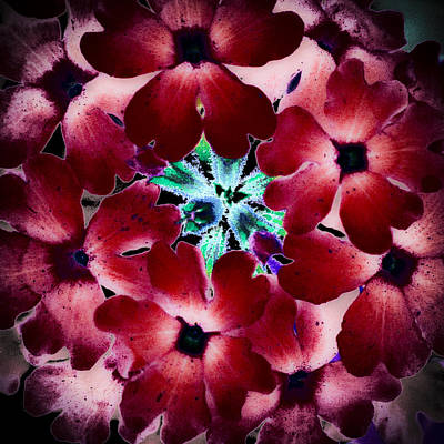 Macros Photograph - Soft Scarlet Floral by David Patterson