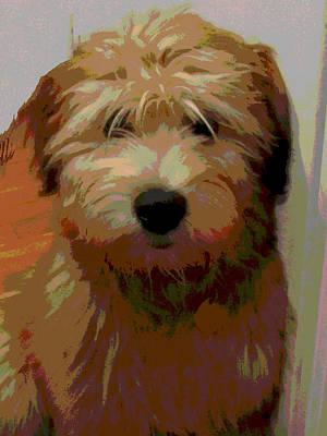 Soft Wheaten Terrier Art Print