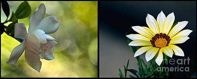 Photograph - Soft White Diptychs by Ken Frischkorn