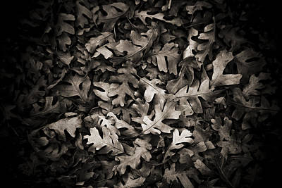 Photograph - Softly Fallen Leaves by Marilyn Hunt