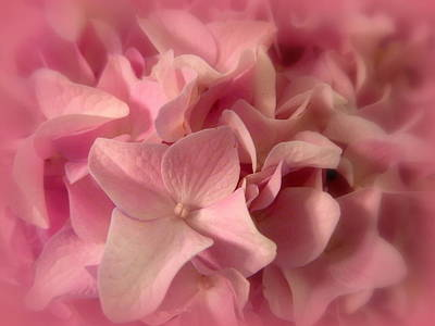 Photograph - Softly Romantic Hydrangea by Cindy Wright