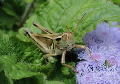 Softly Sitting Grasshopper Art Print by Trish Hale