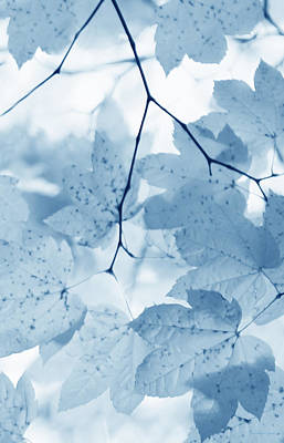 Softness Of Blue Leaves Art Print by Jennie Marie Schell
