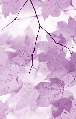 Photograph - Softness Of Violet Maple Leaves by Jennie Marie Schell