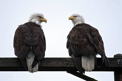 Photograph - Soggy Eagle Pair D3199 by Wes and Dotty Weber
