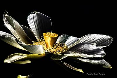 Solarized Lotus A Art Print by Travis Burgess