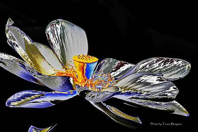 Solarized Lotus B Art Print by Travis Burgess