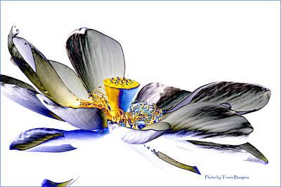 Solarized Lotus C Art Print by Travis Burgess