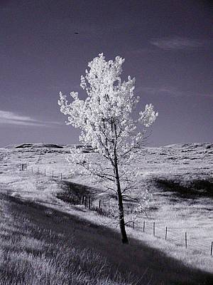 Photograph - Solitary Tree by HW Kateley