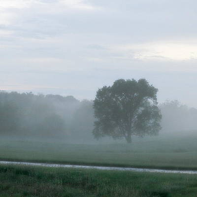Photograph - Solitary Tree Stands Firmly In A Foggy Field After An Early Evening Rain Shower - Square by Angela Rath