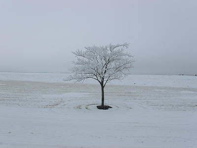 Solitary White Tree  Original by Brian  Maloney
