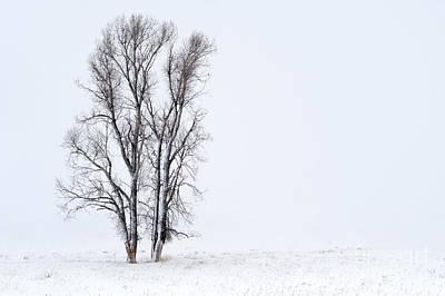 Photograph - Solitude by Sandra Bronstein