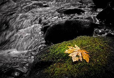 Photograph - Solitude by Steve McKinzie