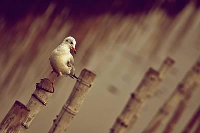 Kornrawiee Photograph - Solo by Kornrawiee Miu Miu