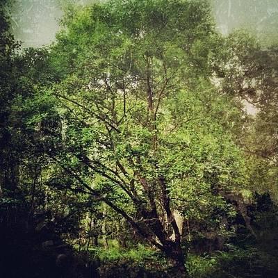 Woodland Wall Art - Photograph - #solo_tree #instanature #ig_nesia by Nikki Sheppard