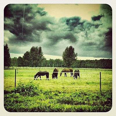 Some #horses In The Field Art Print