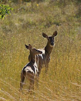 Photograph - Some Very Deer Friends Of Mine by Ben Upham III