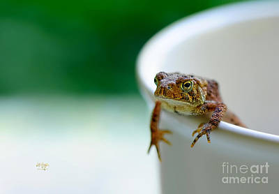 Frogs Photograph - Somebody Needs Coffee by Lois Bryan