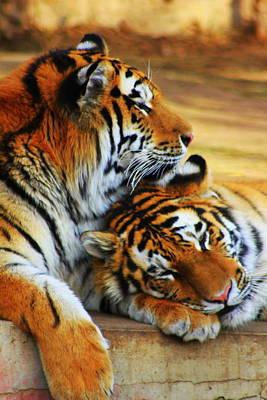 Tigress Digital Art - Someone To Watch Over Me by Ann Sokolovich