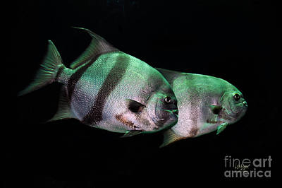 Photograph - Something Fishy This Way Comes by Lois Bryan