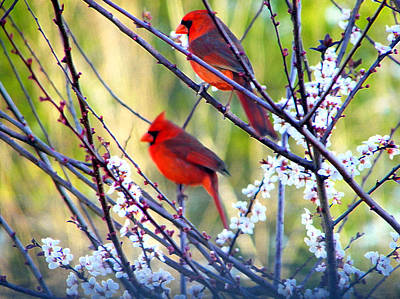 Photograph - Song Of Spring by Judy Wanamaker