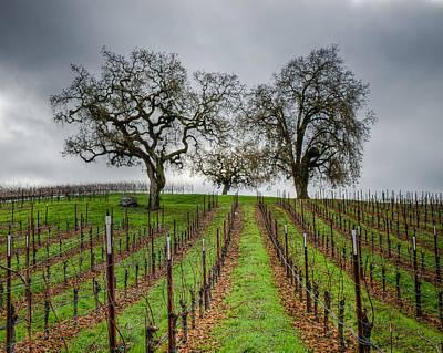 Sonoma County Vineyard Art Print by Joan McDaniel
