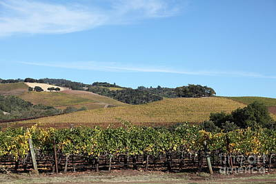 Sonoma Vineyards - Sonoma California - 5d19309 Art Print by Wingsdomain Art and Photography
