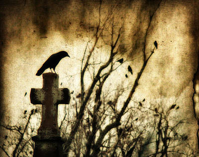 Soulful Crow Print by Gothicrow Images