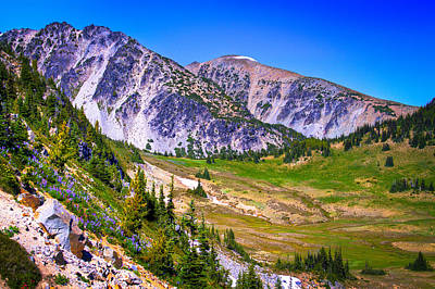 Photograph - Sourdough Ridge - Mount Rainier National Park by David Patterson