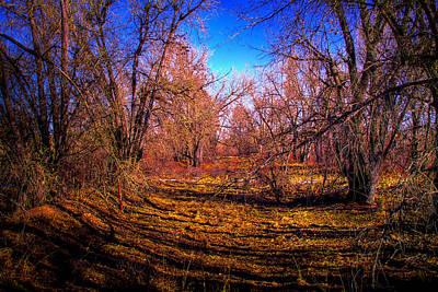 Photograph - South Platte Park IIi by David Patterson