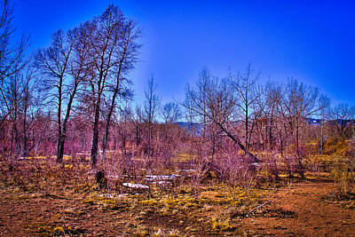 Photograph - South Platte Park Landscape by David Patterson