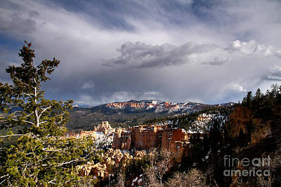 Photograph - South Rim Bryce Canyon by Butch Lombardi