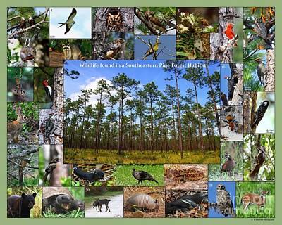 Southeastern Pine Forest Wildlife Poster Art Print