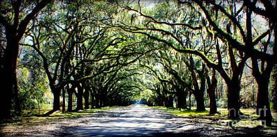 Photograph - Southern Drama by Carol Groenen
