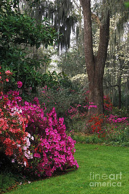 Photograph - Southern Garden - Fs000148 by Daniel Dempster