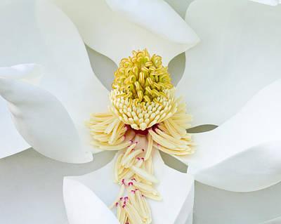 Duke Gardens Photograph - Southern Magnolia by Bill Swindaman