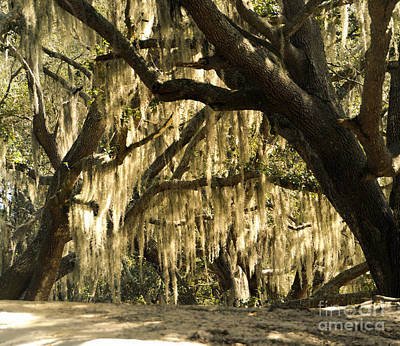 Photograph - Southern Oaks With Moss by Nancy Greenland