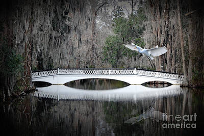 Art Print featuring the photograph Southern Plantation Flying Egret by Dan Friend
