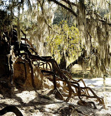 Photograph - Southern Roots by Nancy Greenland